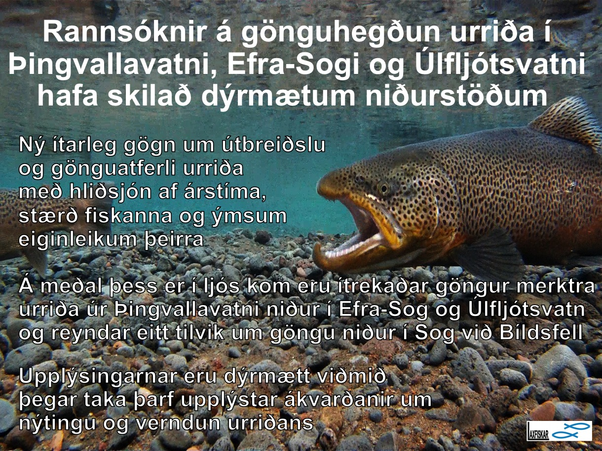 14_thingvallaurridi_vatn_rannsoknir_nidurstodur_daemi_i_research_results_brown_trout-copyright-johannes_s_laxfiskar.is