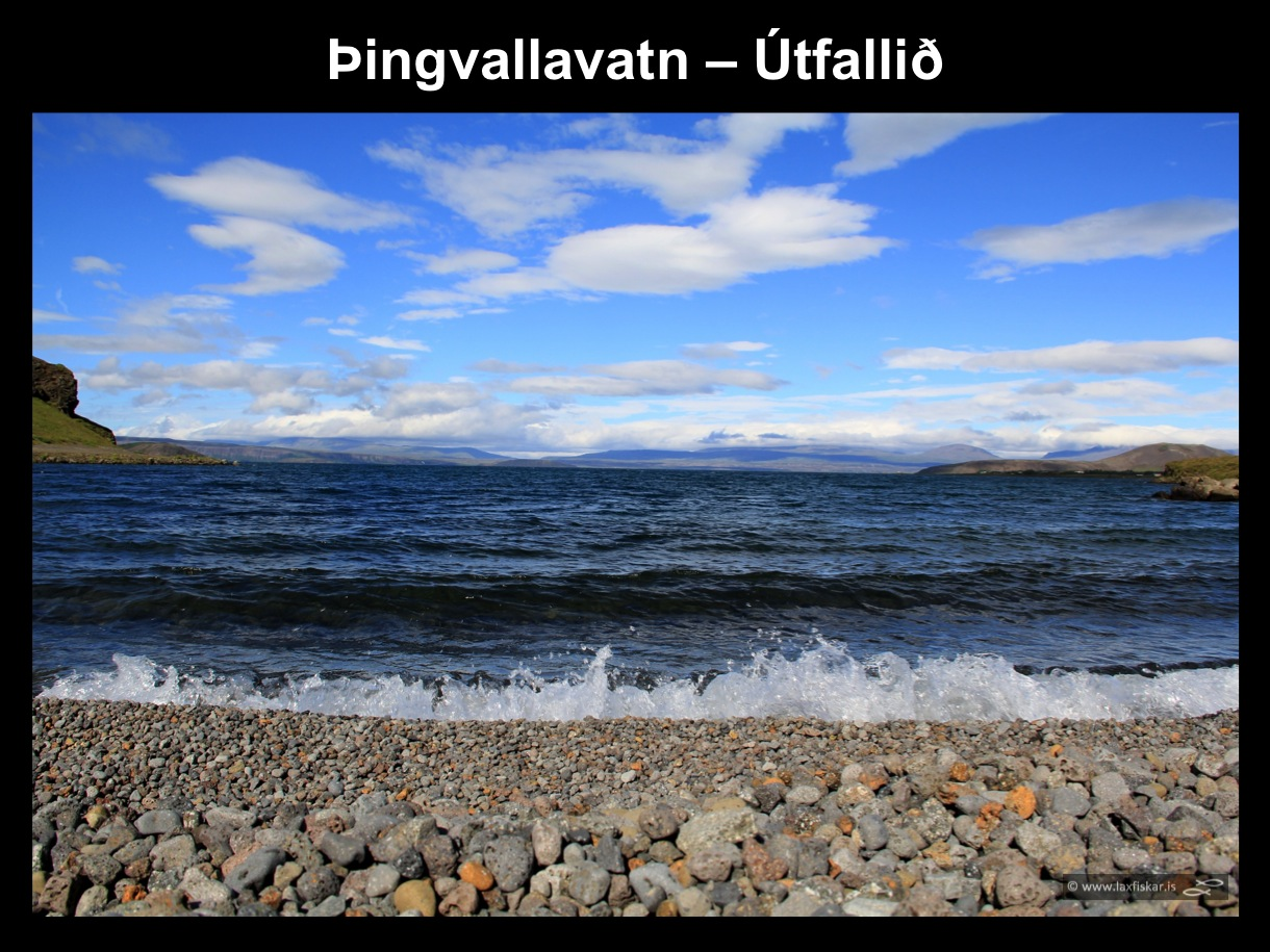 26_thingvallaurridi_rannsoknir_lake_thingvallavatn_utfallid_the_outlet_research_study_brown_trout-copyright-laxfiskar.is